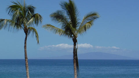 Beautiful palms line a seaside vista in Hawaii Stock Video Footage