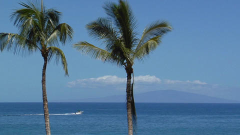 Beautiful palms line a seaside vista in Hawaii Footage