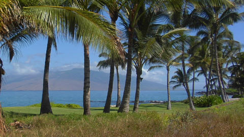 A tilt up to a beautiful palm lined beach in Hawaii Stock Video Footage