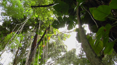 A great low angle shot of a rainforest or tropical jungle Footage