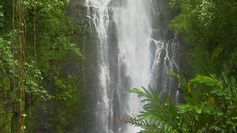 A tropical waterfall flows through a dense rainforest in Hawaii Footage