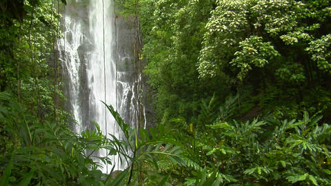 A tropical waterfall flows through a dense rainforest in... Stock Video Footage