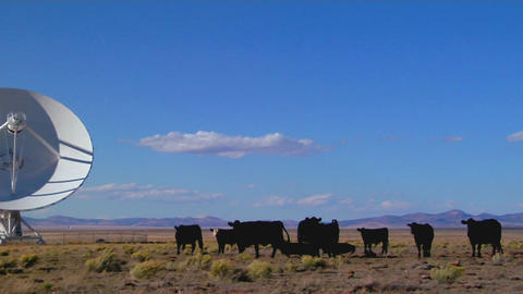 Pan to a satellite dish sits amongst cows in a desolate field Live Action