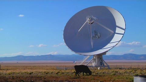A satellite dish sits in a field with cattle Stock Video Footage