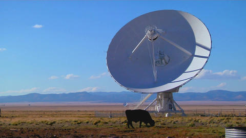 A satellite dish sits in a field with cattle Footage