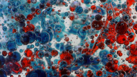 Blue and red drops of oil float down and collect on a white surface Footage
