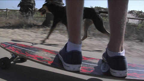 A young man skateboards while holding his dog on a leash Stock Video Footage