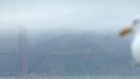 A seagull surveys the Golden Gate Bridge obscured by fog in the background Footage
