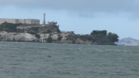A seagull stands on a wall across from Alcatraz Island Footage
