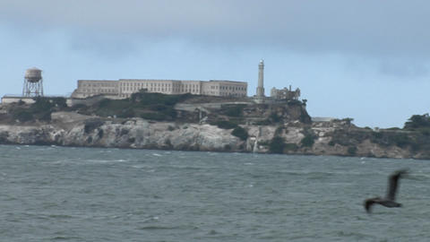 A seagull stands on a wall across from Alcatraz Island Stock Video Footage