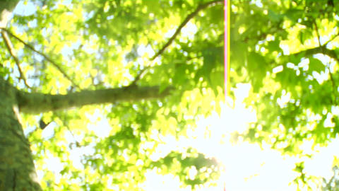 Bright green tree leaves glisten in the sunlight Stock Video Footage