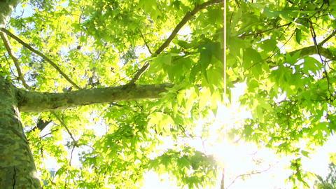 Bright Green Tree Leaves Glisten In The Sunlight stock footage