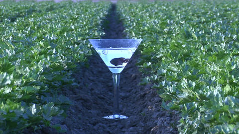 A fish swims in a martini glass on a farm Stock Video Footage