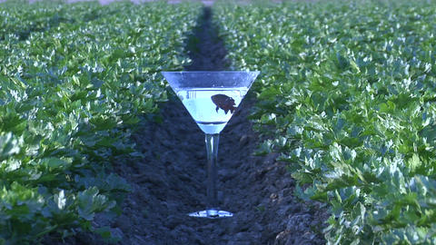 A fish swims in a martini glass on a farm Footage