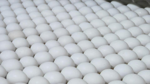 White eggs move along on a factory conveyor belt Footage