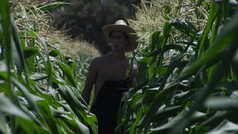 A farmer walks through a corn field Stock Video Footage