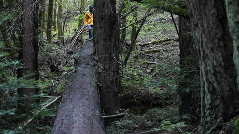 One man running along a fallen tree in the woods Stock Video Footage