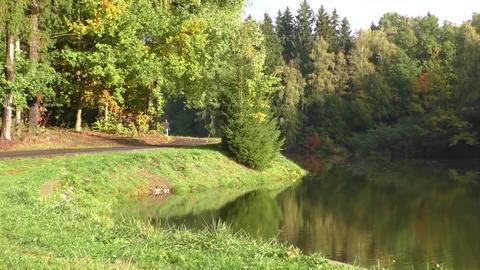 Landscape with autumn forest and lake Footage