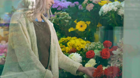 Florist caring for bright blooming roses in flower shop Live Action