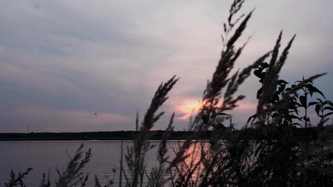 Silhouette of grass over a silver calm river at sunset. River landscape. Dusk on the river Live Action