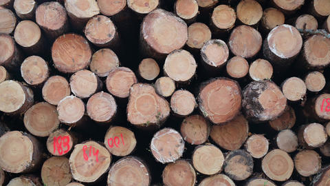 Cut down tree trunks on a pile in a forest. Cross section of tree trunks background. Deforestation Live Action