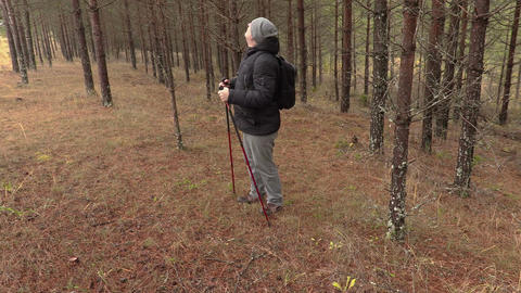 Hiker walking in pine forest Footage