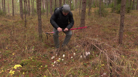 Hiker in the woods at fly agaric Footage