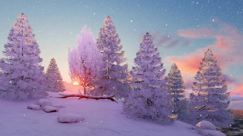Snow covered winter firs at sunset or sunrise Footage