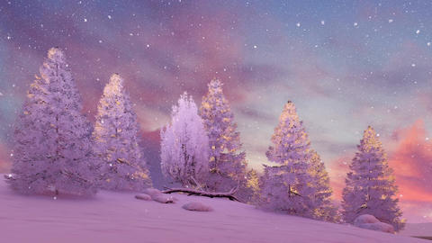 Snow covered firs under scenic sunset or sunrise sky Animation