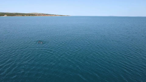 Aerial - Small group of dolphins swimming in the Adriatic sea Footage
