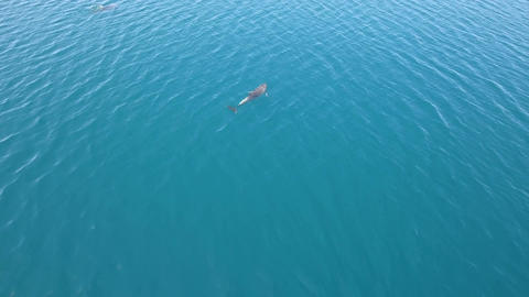 Aerial - Two dolphins diving in Adriatic sea and enjoying freedom on a sunny day Footage