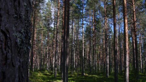 Epic Forest Slider Dolly Shot Sunny Nature Footage