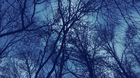 Trees and dark sky in winter forest, nature and dramatic environment Live Action