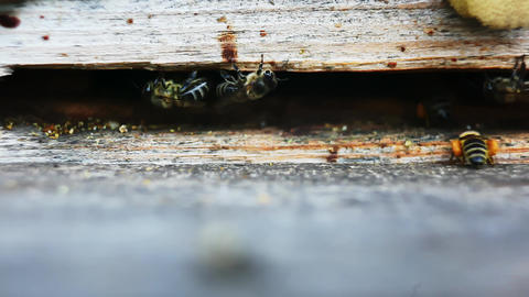 Bee flies into the hive GIF