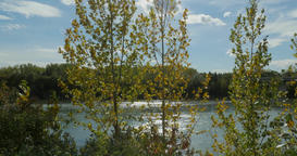 Trees glowing in autumn sun. Footage