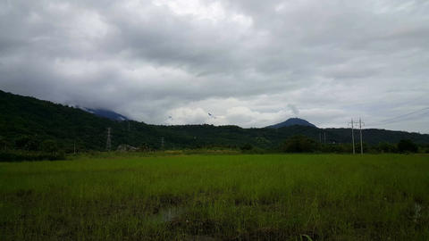 Rice fields in front of mountains in Shoufeng Footage