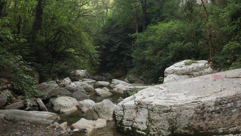 Mountain river among the rocks. Carpathian river in the forest. A river in the Live Action