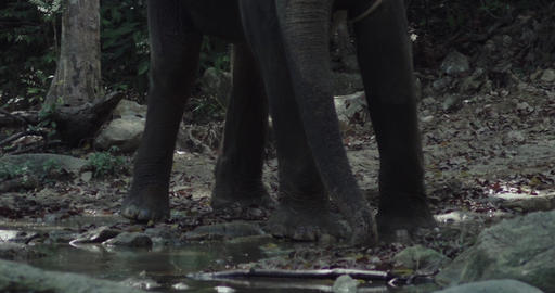 Elephant standing in the shallow rapids of a river. Elephant pours water Footage