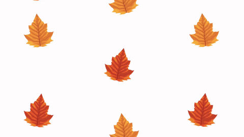 Hello autumn animation with leafs circular frame 4k animated 14 Live Action