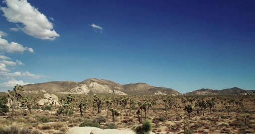 Landscape view of Joshua Tree National Park with Yucca and Joshua Tree. Desert v Footage