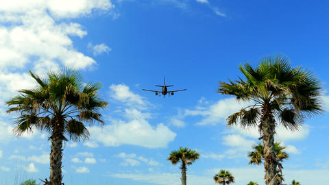 The plane flies over the palm trees, travel weekend Animation