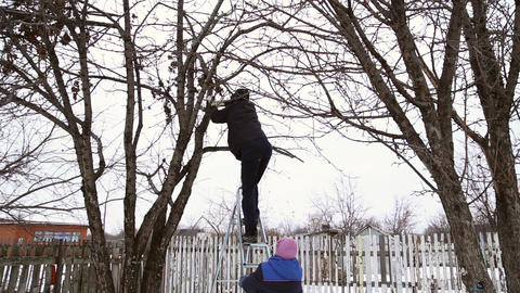 A man climbs the ladders on the apple tree Footage