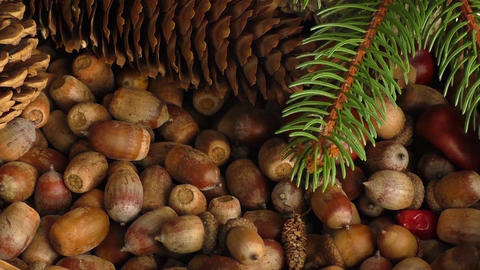 Autumn gifts: chestnuts, cones, acorns Footage