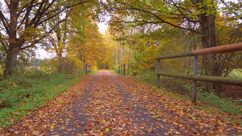 Colorful autumn park path between old trees bent above. Bright colorful trees Live Action