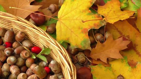 Autumn background - chestnuts, acorns Footage