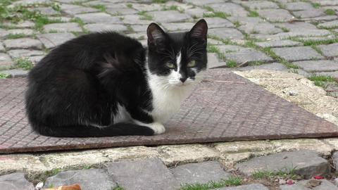 Little lonely kitten sitting in the yard Footage
