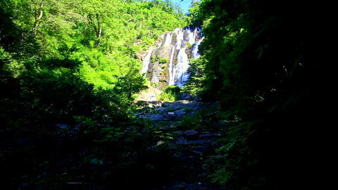 Waterfall Cascade among Bright Green from Dark Shady Place Footage