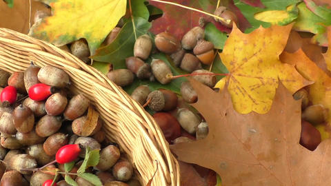 Autumn background - chestnuts, acorns and autumn leaves Footage
