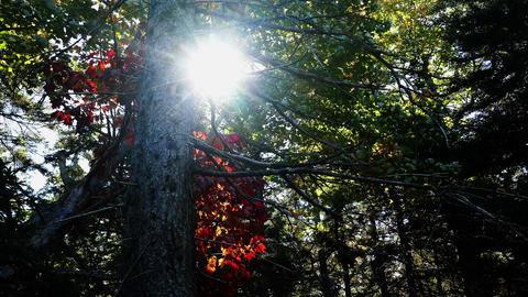 Sun behind trees in Autumn Footage