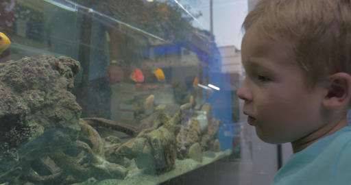 In city of Thessaloniki Greece father and son looking at aquarium with fish Footage